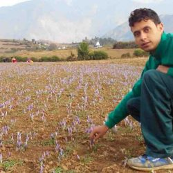 Pradeep Parihar plucking saffron flowers